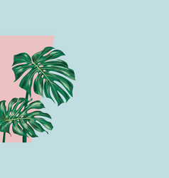 monstera deliciosa on color paper background vector image
