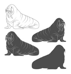 Set black and white with walrus vector