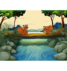 Two squirrels at the river vector image vector image