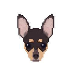 chihuahua head in pixel art style dog vector image vector image