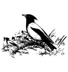 Bird rosy starling vector