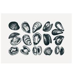 Hand drawn edible marine mollusks drawings set vector