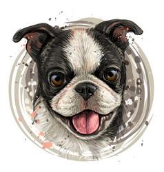 og breed boston terrier portrait vector image