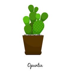 Opuntia cactus in pot vector