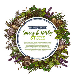Spices and herbs farm store sketch poster vector