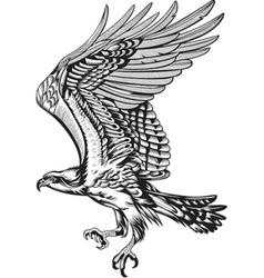 Wild Predatory Bird vector image vector image