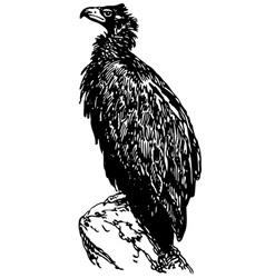 bird cinereous vulture vector image vector image