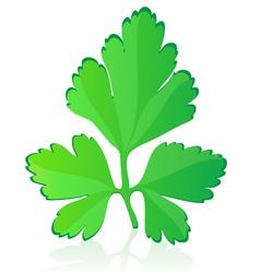 parsley vector image vector image