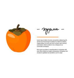 Bright whole persimmon vector