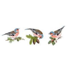 finch birds set vector image