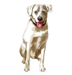 Yellow dog breed labrador retriever sits vector