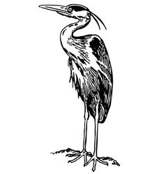 Bird grey heron vector
