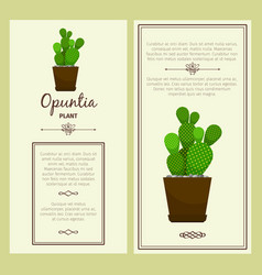 greeting card with opuntia plant vector image