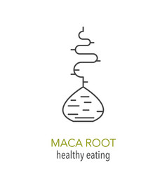 maca root line icon vector image