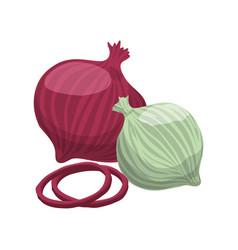 Onions purple white slice vegetable vector