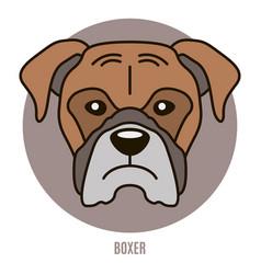 Portrait of boxer vector