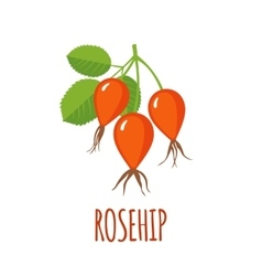 Rosehip icon in flat style on white background vector