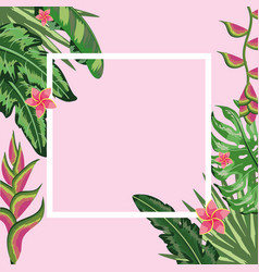 square frame with natural flowers and plants vector image