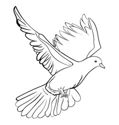 free flying white dove sketch vector image