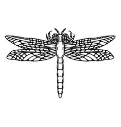 dragonfly isolated on white vector image