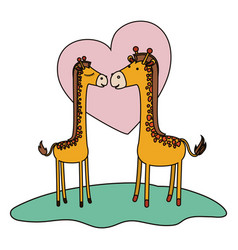 Giraffes couple over grass in colorful silhouette vector