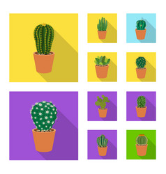 isolated object of cactus and pot symbol set of vector image
