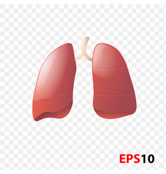 Lungs human internal organ realistic isolated vector