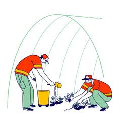 Workers in uniform planting berries in greenhouse vector