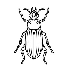 beetle isolated on white background vector image