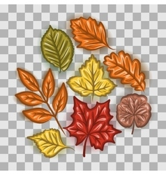 Autumn leaves set vector image