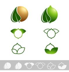 Macadamia Nut vector image