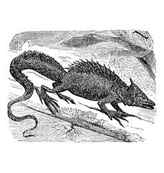 Basilisk vintage engraving vector image