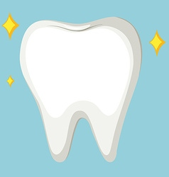Close up cleaned tooth vector