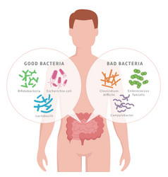 Good bacteria and bad bacteria in human intestines vector