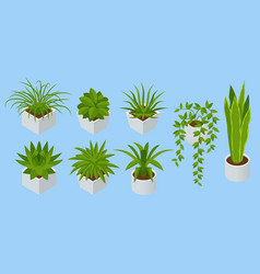 isometric set indoor flowers isolated vector image