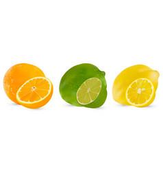 set of citrus fruit lime orange and lemon vector image