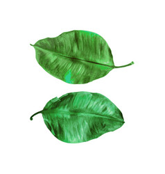 Two green leaves painted in watercolor on white vector