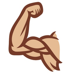 biceps - arm showing muscles vector image