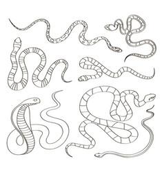 hand drawn snake set vector image