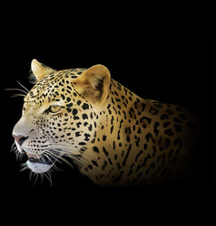 Leopard on black background vector