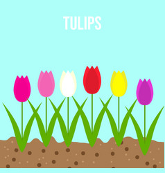tulips set of spring garden flowers vector image