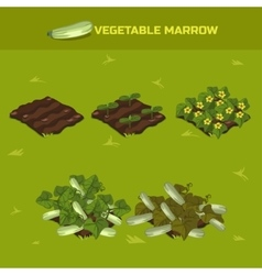 SET 3 Isometric Stage of growth Vegetable marrow vector image vector image