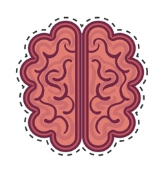 brain organ human isolated icon vector image