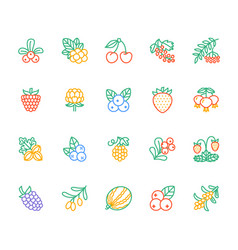 Forest berries colored flat line icons - blueberry vector