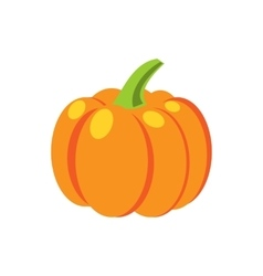 Fresh orange pumpkin isolated vector