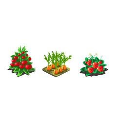 Garden vegetables and berries carrot tomato vector