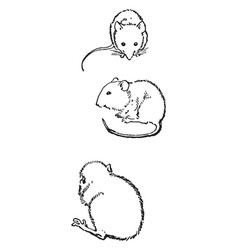 Mice sitting in this design vintage engraving vector