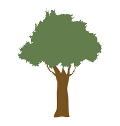 Tree natural forest banch foliage image vector