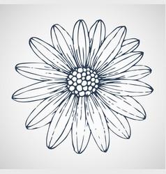 daisies hand drawn vector image