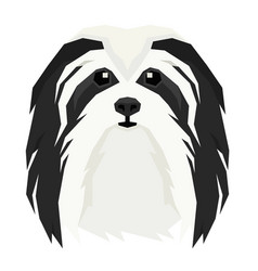 Dogs head havanese dog vector